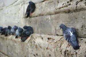 ציפורים יושבות על קיר